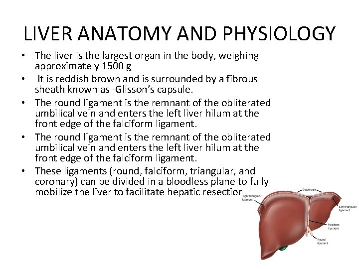 LIVER ANATOMY AND PHYSIOLOGY • The liver is the largest organ in the body,