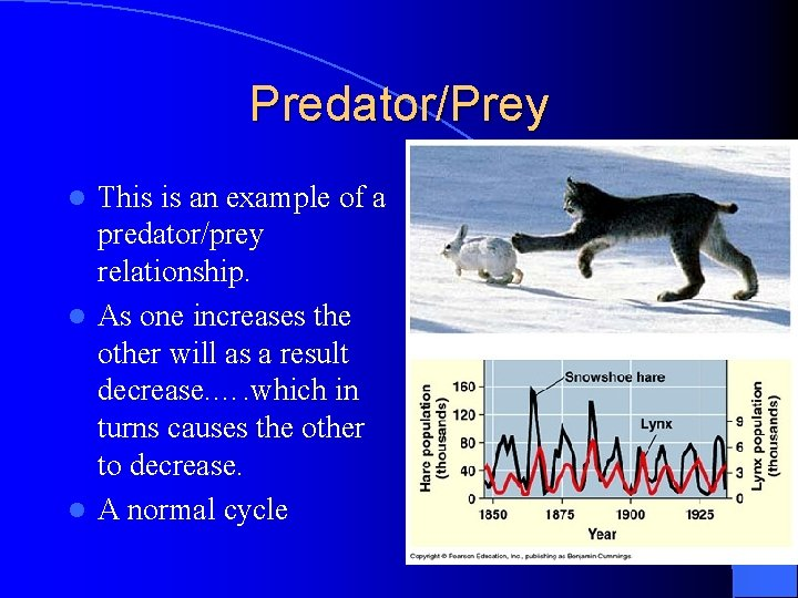 Predator/Prey This is an example of a predator/prey relationship. l As one increases the