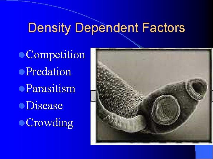 Density Dependent Factors l Competition l Predation l Parasitism l Disease l Crowding