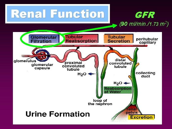 Renal Function GFR (90 ml/min. /1. 73 m 2)