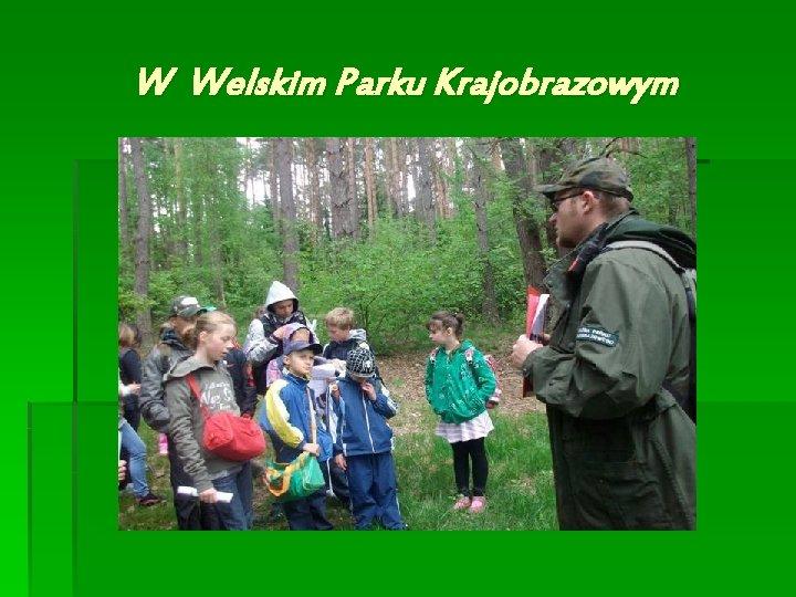 W Welskim Parku Krajobrazowym