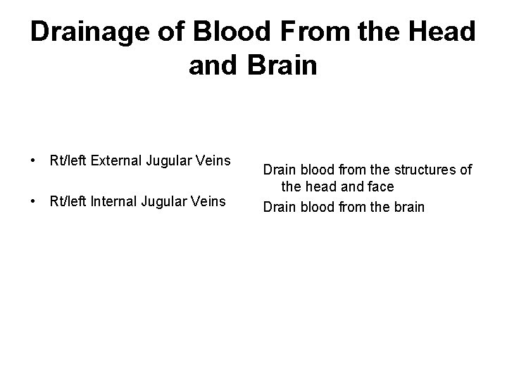 Drainage of Blood From the Head and Brain • Rt/left External Jugular Veins •