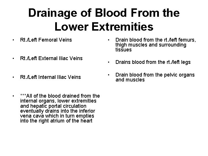 Drainage of Blood From the Lower Extremities • Rt. /Left Femoral Veins • Rt.