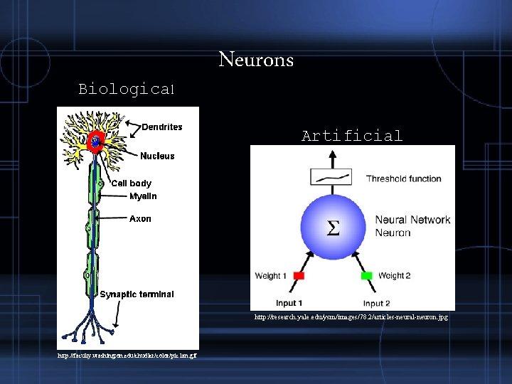 Biological Neurons Artificial http: //research. yale. edu/ysm/images/78. 2/articles-neural-neuron. jpg http: //faculty. washington. edu/chudler/color/pic 1