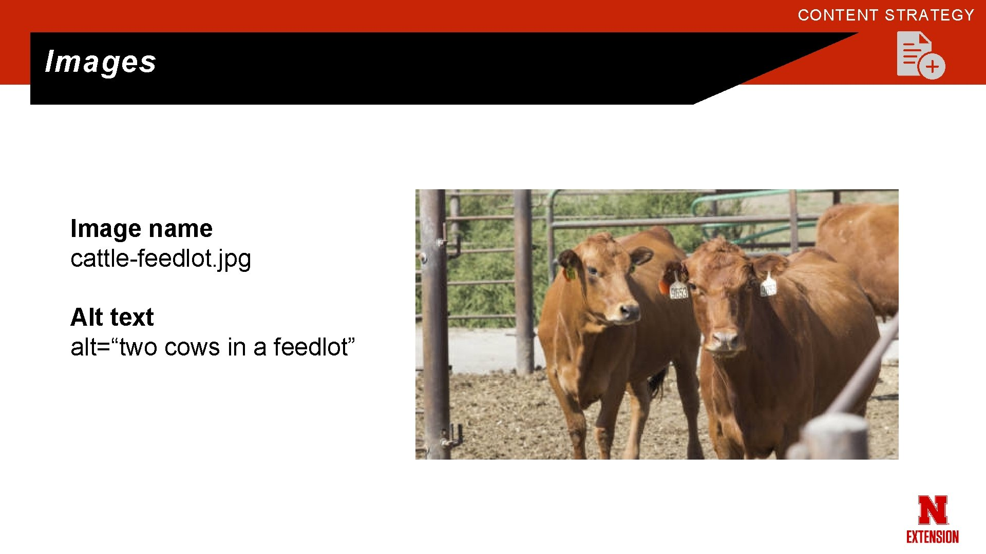 """CONTENT STRATEGY Images Image name cattle-feedlot. jpg Alt text alt=""""two cows in a feedlot"""""""