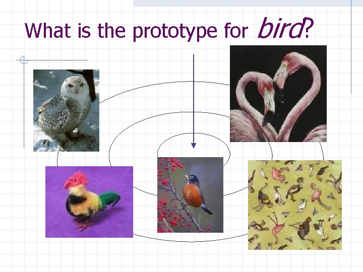 What is the prototype for bird?