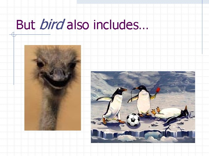 But bird also includes…