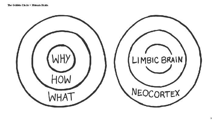 The Golden Circle + Human Brain 8