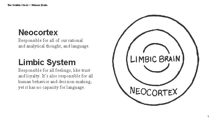 The Golden Circle + Human Brain Neocortex Responsible for all of our rational and