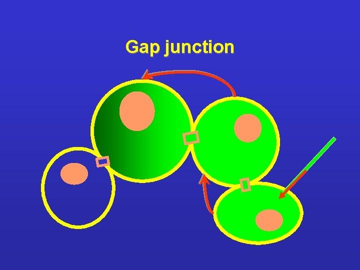 Gap junction