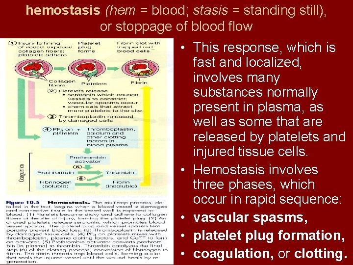 hemostasis (hem = blood; stasis = standing still), or stoppage of blood flow •