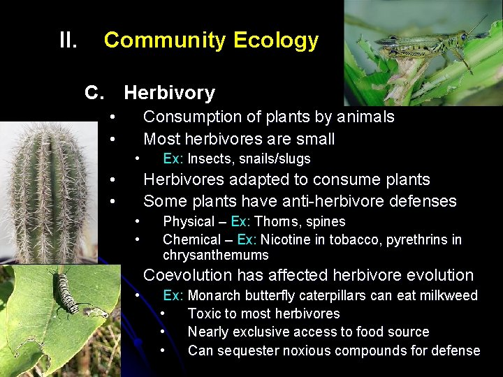 II. Community Ecology C. Herbivory • • Consumption of plants by animals Most herbivores