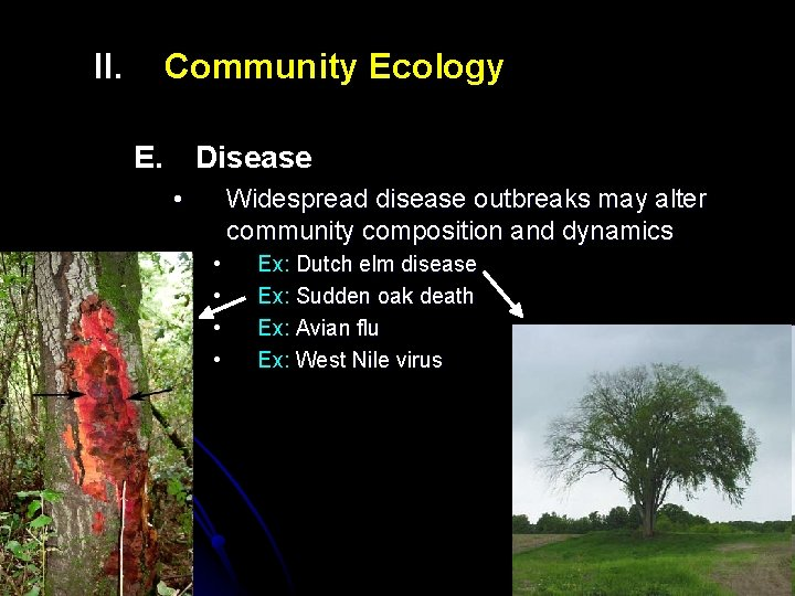 II. Community Ecology E. Disease • Widespread disease outbreaks may alter community composition and