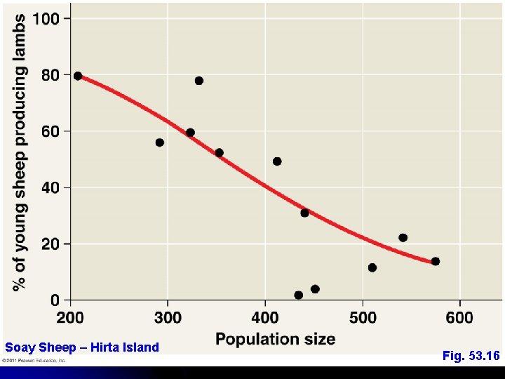 Soay Sheep – Hirta Island Fig. 53. 16