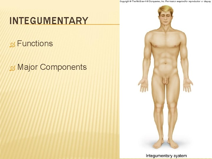 INTEGUMENTARY Functions Major Components