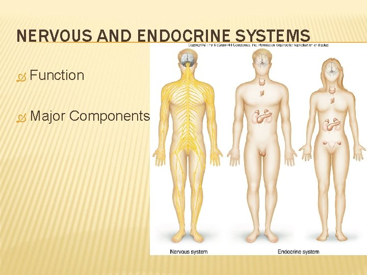 NERVOUS AND ENDOCRINE SYSTEMS Function Major Components