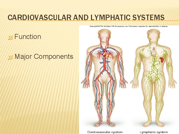 CARDIOVASCULAR AND LYMPHATIC SYSTEMS Function Major Components