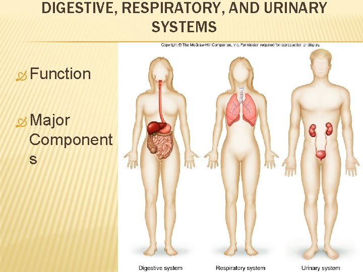 DIGESTIVE, RESPIRATORY, AND URINARY SYSTEMS Function Major Component s