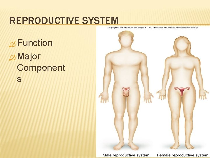 REPRODUCTIVE SYSTEM Function Major Component s