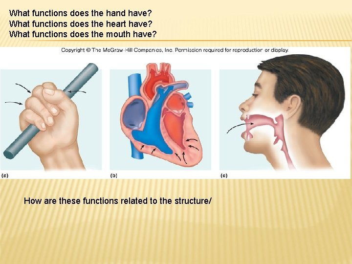 What functions does the hand have? What functions does the heart have? What functions