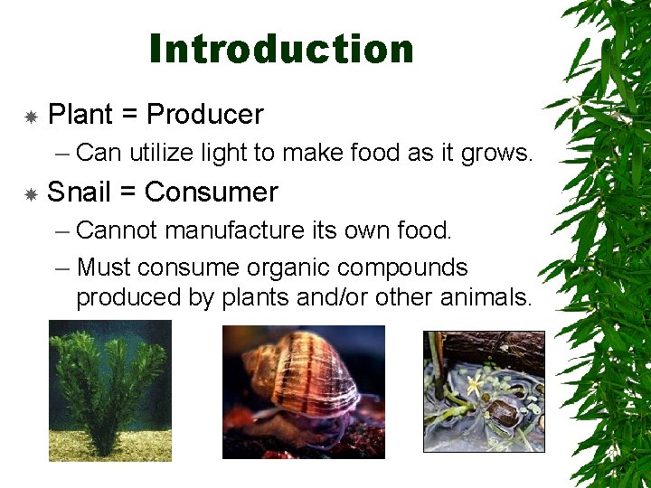 Introduction Plant = Producer – Can utilize light to make food as it grows.