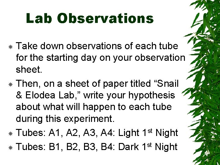 Lab Observations Take down observations of each tube for the starting day on your
