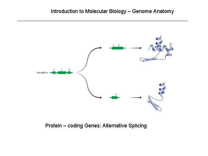 Introduction to Molecular Biology – Genome Anatomy Protein – coding Genes: Alternative Splicing