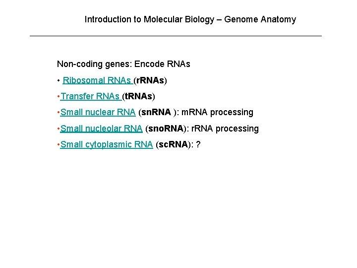 Introduction to Molecular Biology – Genome Anatomy Non-coding genes: Encode RNAs • Ribosomal RNAs