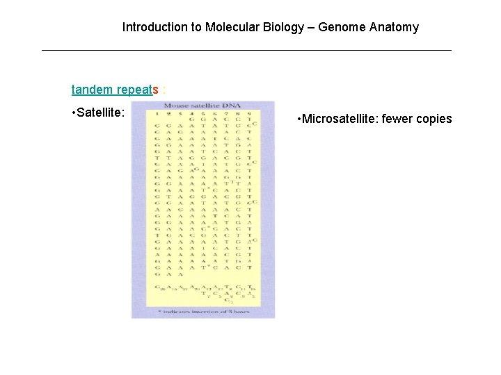 Introduction to Molecular Biology – Genome Anatomy tandem repeats : • Satellite: • Microsatellite: