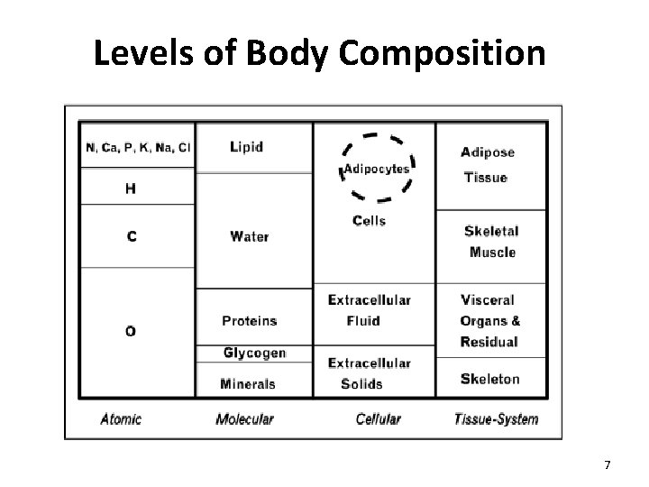 Levels of Body Composition 7