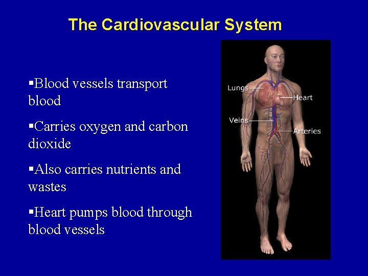 The Cardiovascular System §Blood vessels transport blood §Carries oxygen and carbon dioxide §Also carries