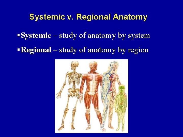 Systemic v. Regional Anatomy §Systemic – study of anatomy by system §Regional – study