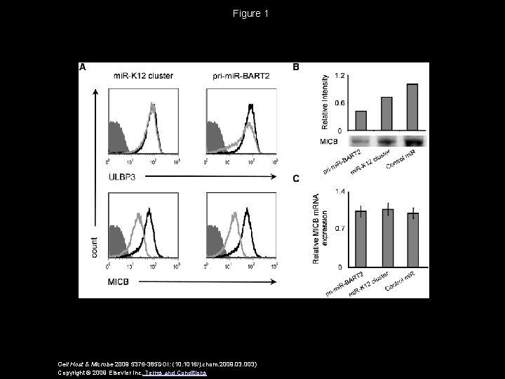 Figure 1 Cell Host & Microbe 2009 5376 -385 DOI: (10. 1016/j. chom. 2009.