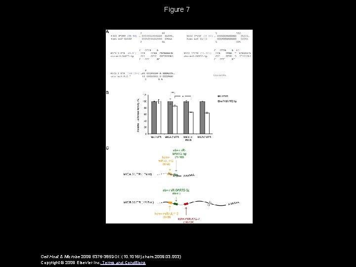 Figure 7 Cell Host & Microbe 2009 5376 -385 DOI: (10. 1016/j. chom. 2009.