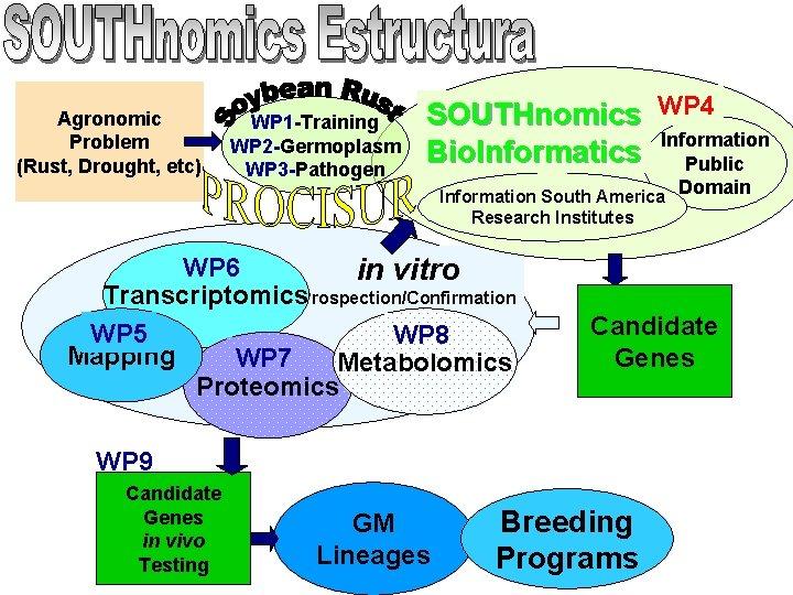 Agronomic Problem (Rust, Drought, etc) WP 1 -Training WP 2 -Germoplasm WP 3 -Pathogen