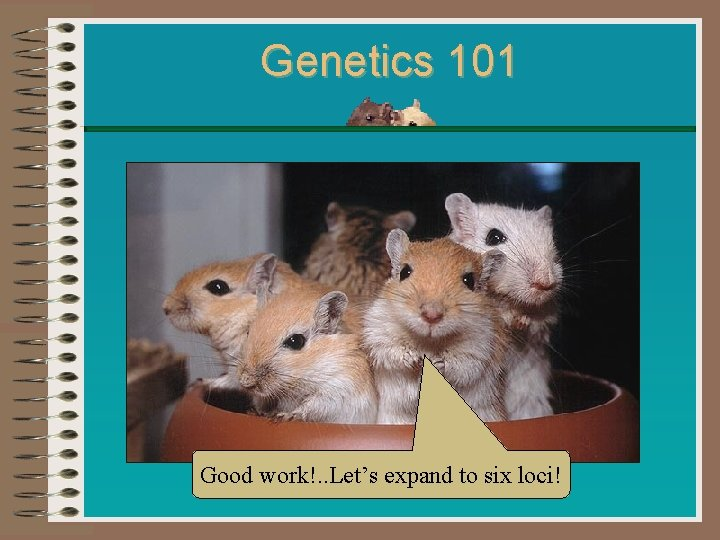 Genetics 101 Good work!. . Let's expand to six loci!
