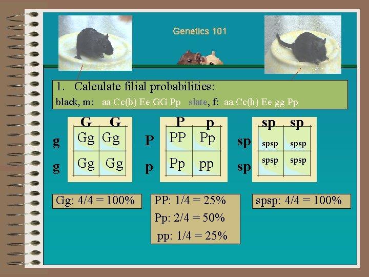 Genetics 101 1. Calculate filial probabilities: black, m: aa Cc(b) Ee GG Pp slate,
