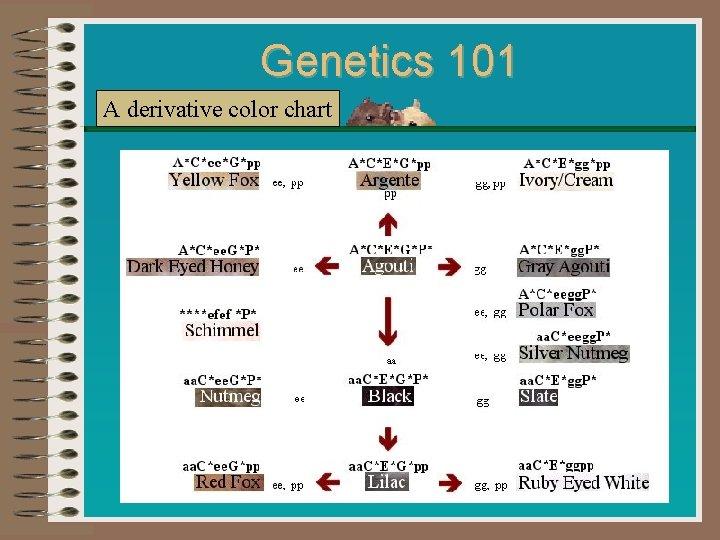 Genetics 101 A derivative color chart