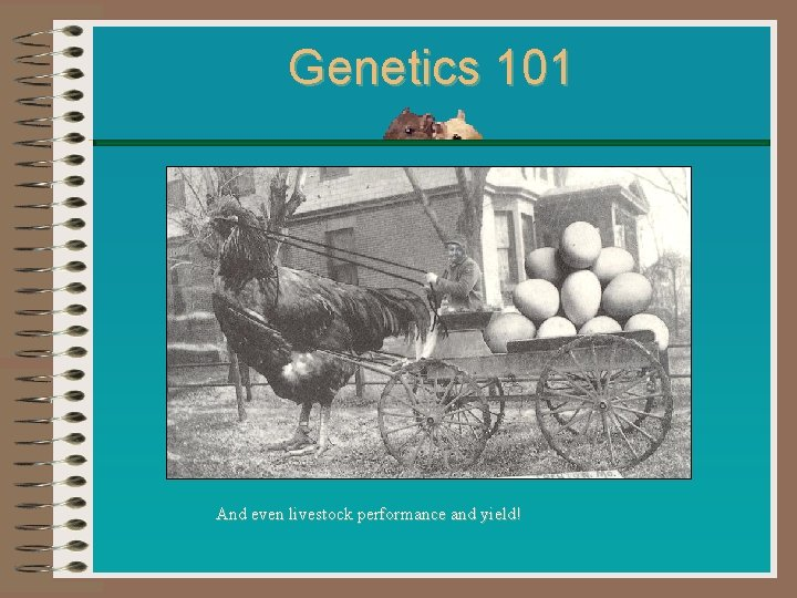 Genetics 101 And even livestock performance and yield!