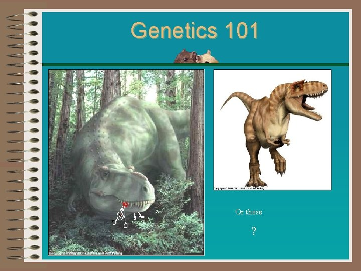 Genetics 101 Or these ?