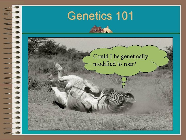 Genetics 101 Could I be genetically modified to roar?