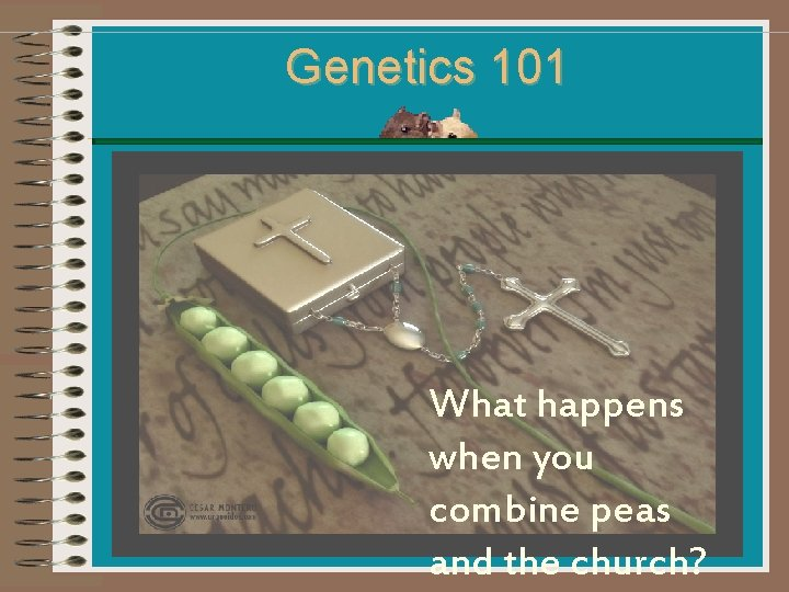 Genetics 101 macro What happens when you combine peas and the church?