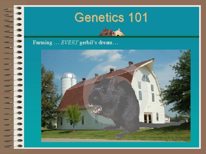 Genetics 101 Farming … EVERY gerbil's dream…