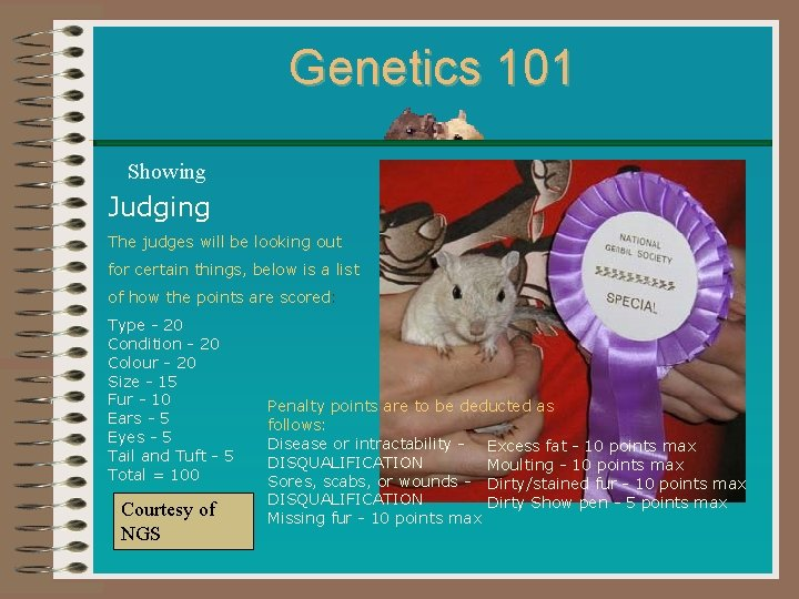 Genetics 101 Showing Judging The judges will be looking out for certain things, below