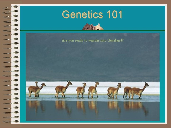 Genetics 101 Are you ready to wander into Geneland?