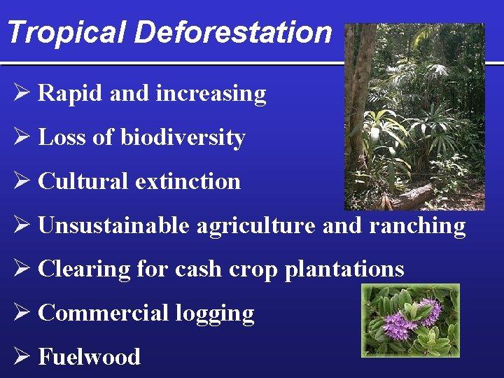 Tropical Deforestation Ø Rapid and increasing Ø Loss of biodiversity Ø Cultural extinction Ø