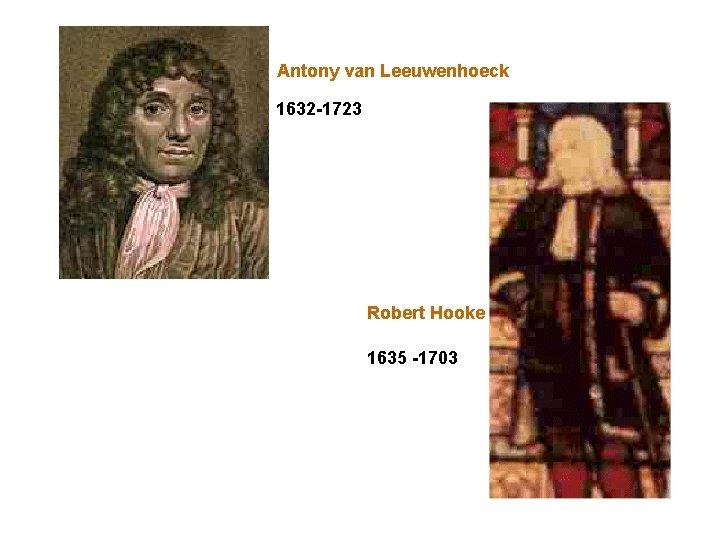 Antony van Leeuwenhoeck 1632 -1723 Robert Hooke 1635 -1703