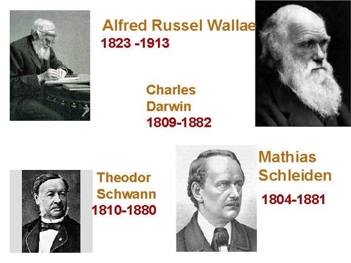 Alfred Russel Wallae 1823 -1913 Charles Darwin 1809 -1882 Theodor Schwann 1810 -1880 Mathias