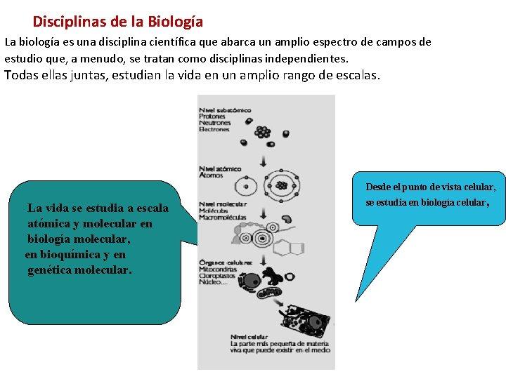 Disciplinas de la Biología La biología es una disciplina científica que abarca un amplio
