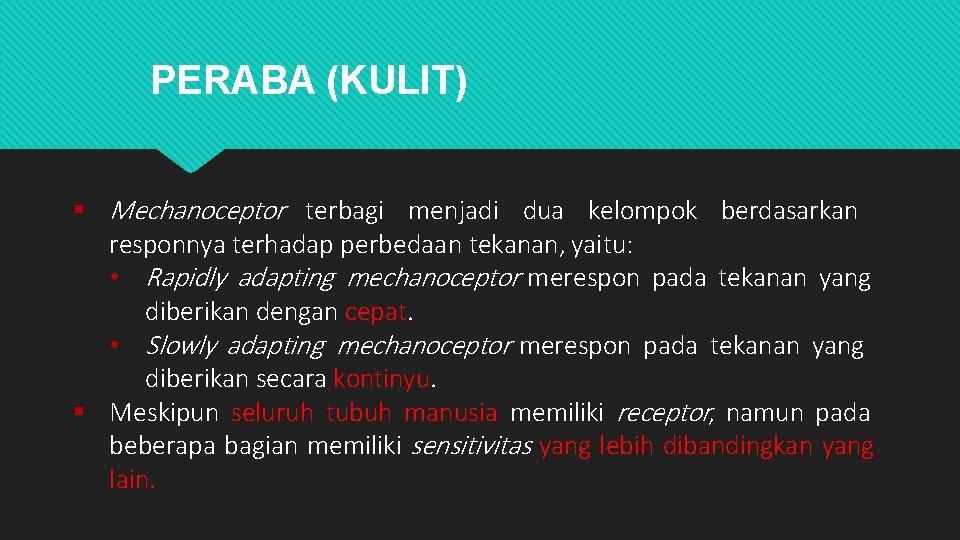 PERABA (KULIT) Mechanoceptor terbagi menjadi dua kelompok berdasarkan responnya terhadap perbedaan tekanan, yaitu: •